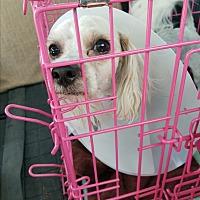 Adopt A Pet :: Pearl Jam - Las Vegas, NV