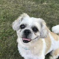 Adopt A Pet :: Danny - Lowell, MA