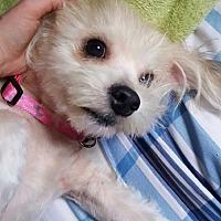 Adopt A Pet :: Oscar - Lewistown, PA