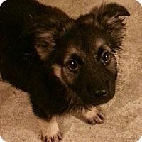 Adopt A Pet :: John - Chicago, IL