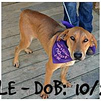 Adopt A Pet :: Beau - Siler City, NC