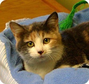 Calico Cat for adoption in Hastings, Nebraska - Zoey