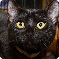 Adopt A Pet :: Lucky - Irvine, CA
