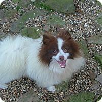 Adopt A Pet :: Clancey - North Little Rock, AR