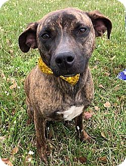 Terrier (Unknown Type, Medium) Mix Dog for adoption in LAFAYETTE, Louisiana - JENNY