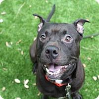 Adopt A Pet :: BOSS - West Palm Beach, FL