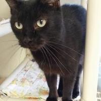 Adopt A Pet :: Manny - Shelbyville, KY