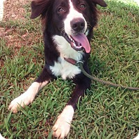 Adopt A Pet :: Gabe Kotter ~ meet me! - Glastonbury, CT