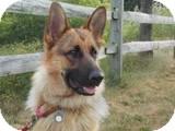 German Shepherd Dog Mix Dog for adoption in Rochester/Buffalo, New York - Chloe