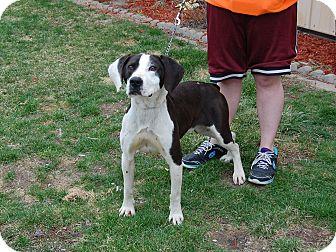 Labrador Retriever Mix Dog for adoption in North Judson, Indiana - Jimeny