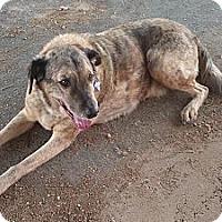 Adopt A Pet :: River - Santa Monica, CA