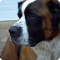 Adopt A Pet :: Mozart - Dandridge, TN