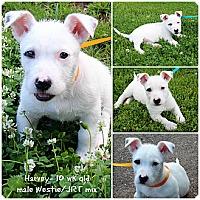 Adopt A Pet :: Harvey - Evansville, IN