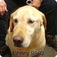 Adopt A Pet :: Johnny - Greencastle, NC
