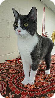 Domestic Mediumhair Cat for adoption in Havelock, North Carolina - Joey