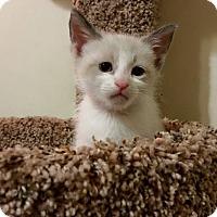 Adopt A Pet :: Shiloh Rosebud's baby - McDonough, GA