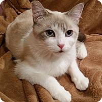 Adopt A Pet :: Lola - Portland, OR