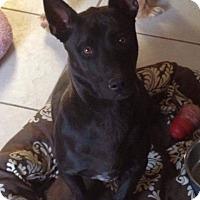 Adopt A Pet :: Max - Henderson, NV