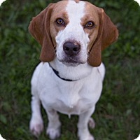 Adopt A Pet :: Dennis - Drumbo, ON
