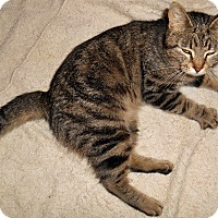 Adopt A Pet :: Karmalee - Chattanooga, TN