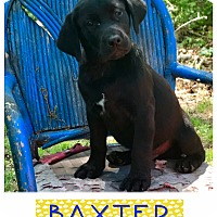 Adopt A Pet :: Baxter pending adoption - Manchester, CT