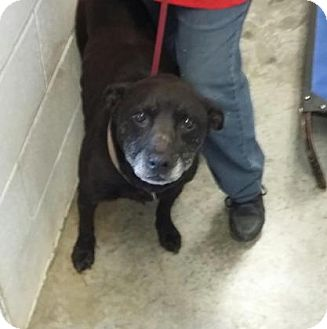 Pit Bull Terrier Mix Dog for adoption in Paducah, Kentucky - Jacks