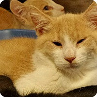 Adopt A Pet :: Dominic - Chelsea - Kalamazoo, MI