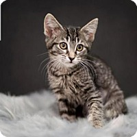Adopt A Pet :: Scarlett - Salt Lake City, UT