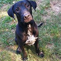 Adopt A Pet :: Nero - Boston, MA