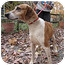Photo 1 - Hound (Unknown Type) Mix Dog for adoption in Chesterfield, Virginia - Zoe
