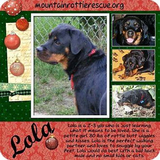 Rottweiler Dog for adoption in Rexford, New York - Lola