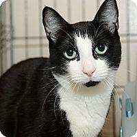 Adopt A Pet :: Frosty - New York, NY