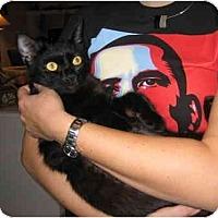 Adopt A Pet :: Nim - Davis, CA