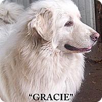 Adopt A Pet :: Gracie - Cambridge, IL