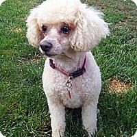 Adopt A Pet :: Penny - Post Falls, ID