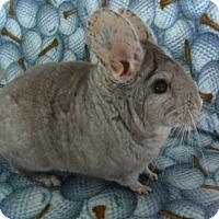 Adopt A Pet :: Lance - Virginia Beach, VA