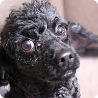 Adopt A Pet :: Duffy - Bridgewater, NJ