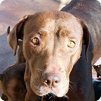 Adopt A Pet :: Hershey - Oakley, CA