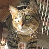 Adopt A Pet :: Caffie - Richmond, CA