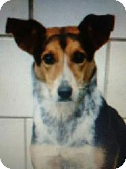 Shepherd (Unknown Type) Mix Dog for adoption in Kendall, New York - Duke