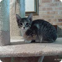 Adopt A Pet :: Annabel - Houston, TX