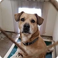 Adopt A Pet :: Sadie - Geneseo, IL