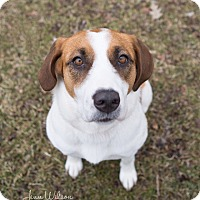 Adopt A Pet :: Gina - Drumbo, ON