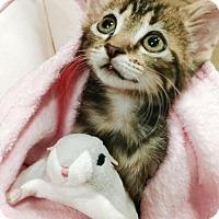 Adopt A Pet :: Squirrel - Greensburg, PA