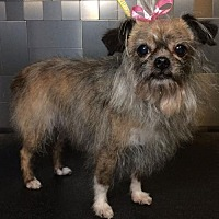 Adopt A Pet :: Lydia - McKinney, TX