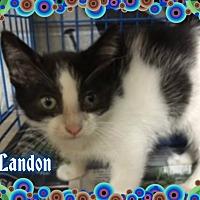 Adopt A Pet :: Landon - Buffalo, IN