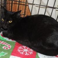 Adopt A Pet :: Inky - Westville, IN