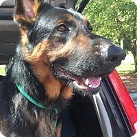Adopt A Pet :: Max fka Eli - Greensboro, NC