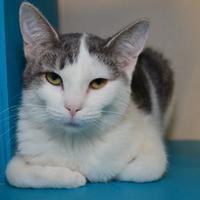 Adopt A Pet :: Opal - Elkhorn, WI