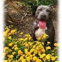 Adopt A Pet :: Mia - Santa Monica, CA